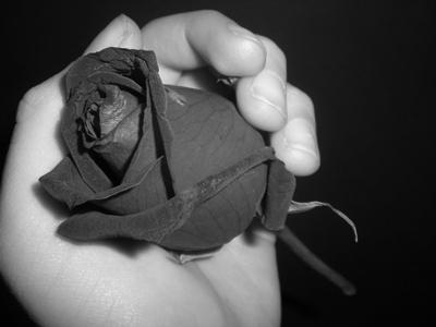 http://momad34922.persiangig.com/image/Rose_in_hand_by_B00KAH0LIC.jpg